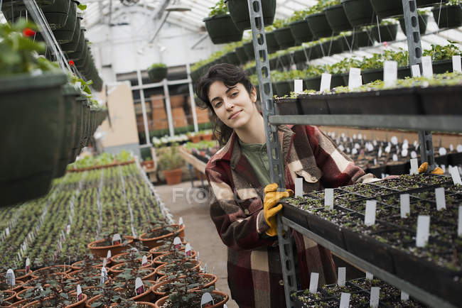 Woman pushing a trolley of seed trays — Stock Photo