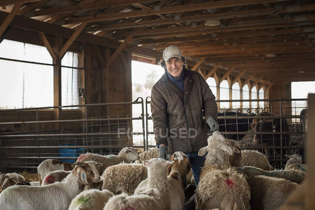 Man surrounded by goats — Stock Photo