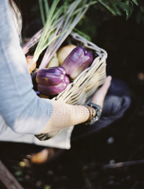 Женщина в огороде — стоковое фото