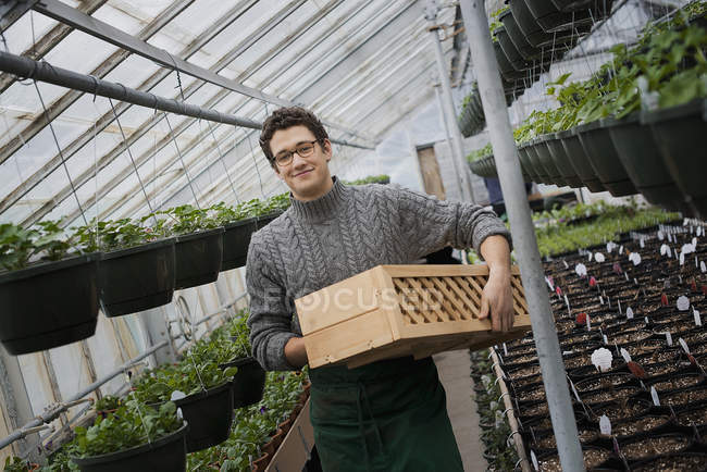 Organic Plant Nursery Glhouse Stock Photo