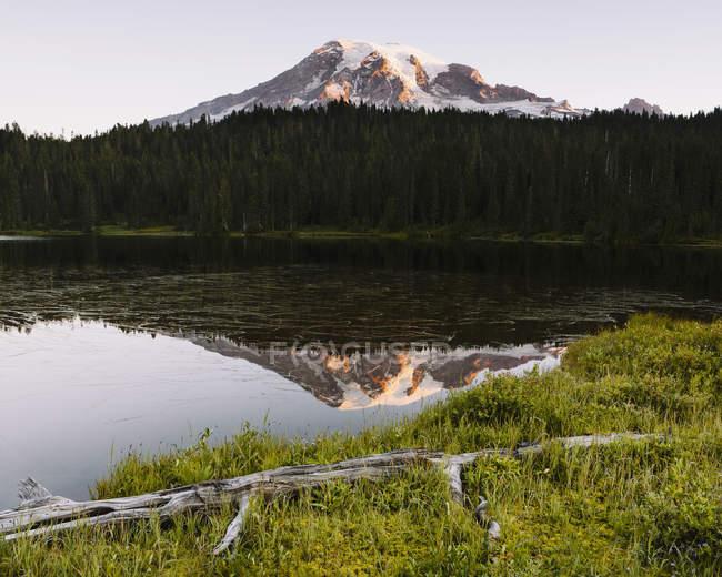 Parque Nacional Monte rainier - foto de stock