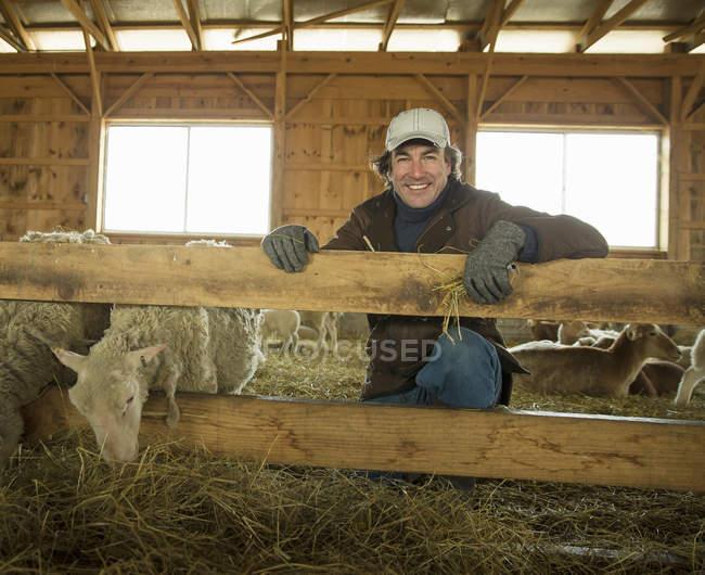 Agricultor e ovelhas em uma caneta — Fotografia de Stock