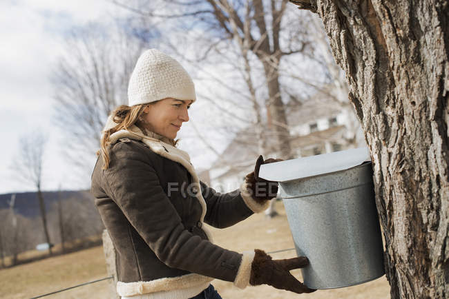 Woman tapping sap from tree. — Stock Photo