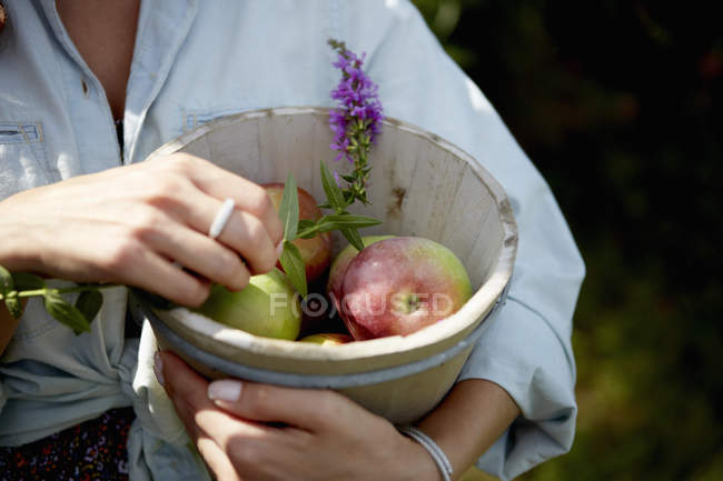 Woman holding bowl with picked apples — Stock Photo