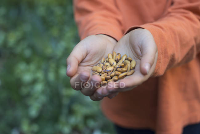 Boy holding a handful of dried pulses. — Stock Photo