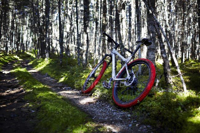 Mountain Bike na trilha — Fotografia de Stock