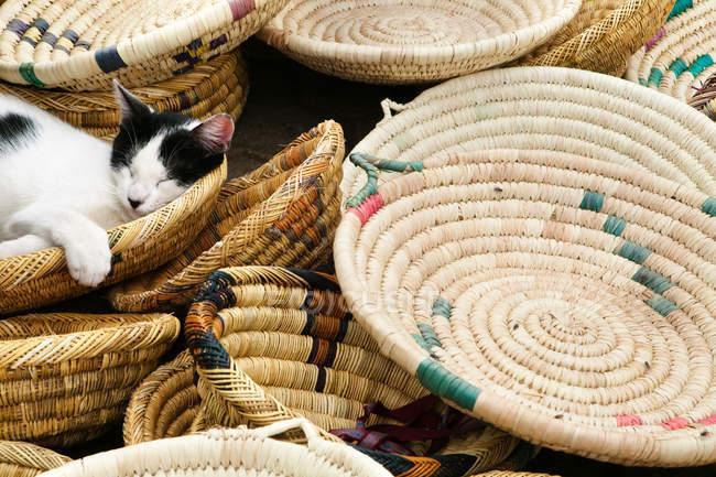 Gato dormir em cestas — Fotografia de Stock