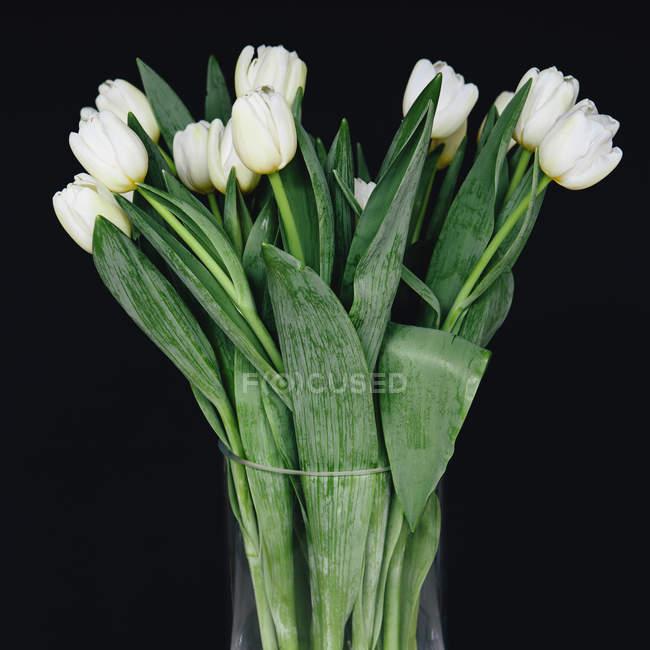 Blancos tulipanes en un florero - foto de stock