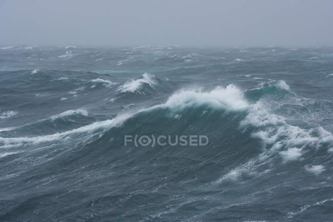 Mares cerca de la isla de Georgia del Sur - foto de stock