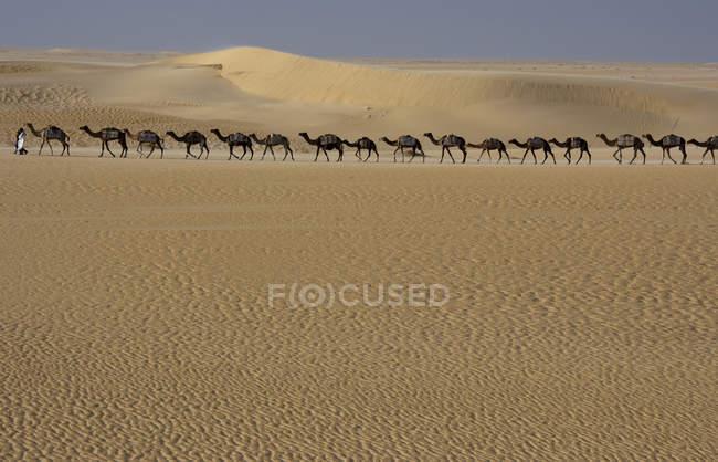 Camel train in desert — Stock Photo