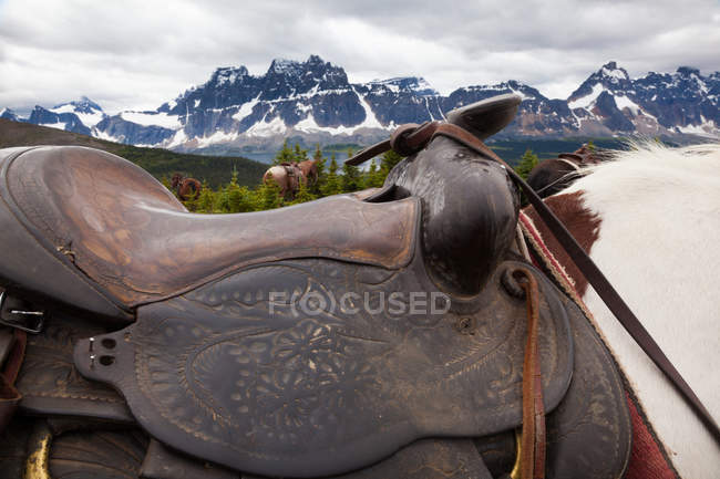 Sella il cavallo, Canada — Foto stock