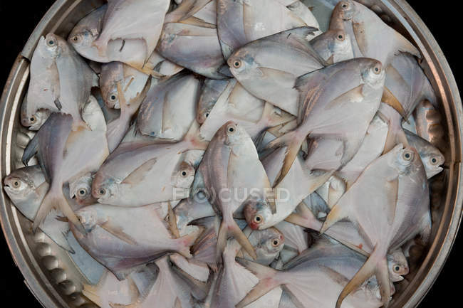 Peixe fresco no cesto — Fotografia de Stock