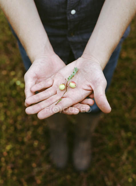 Man harvesting the crop. — Stock Photo