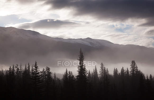 Misty conditions over landscape and forest — Stock Photo