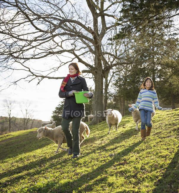 Frau mit Eimer füttert die Schafe — Stockfoto