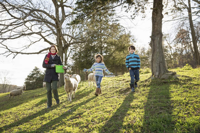 Женщина с ведром кормит овец — стоковое фото