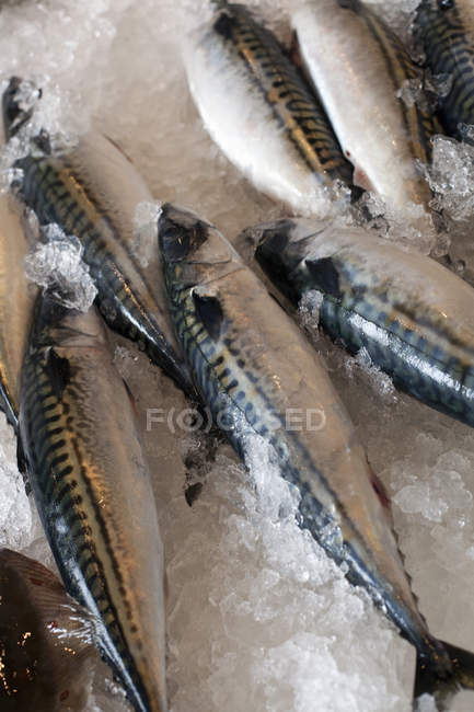 Fresh fish laid out — Stock Photo