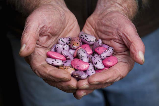 Poignée de graines de haricot rouge — Photo de stock