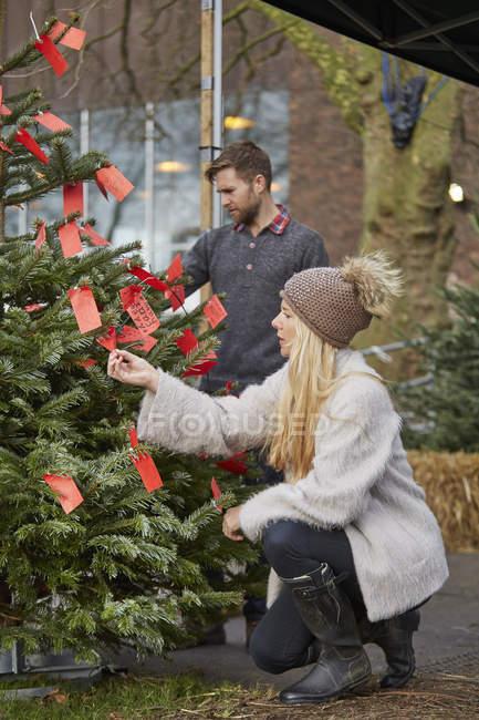 Woman choosing traditional pine tree — Stock Photo