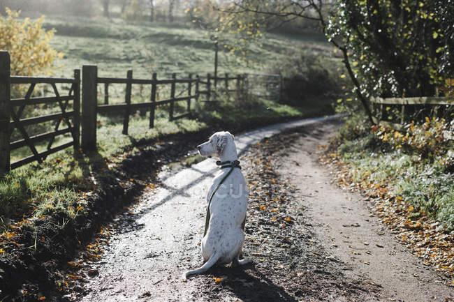 Cão em uma pista do país — Fotografia de Stock