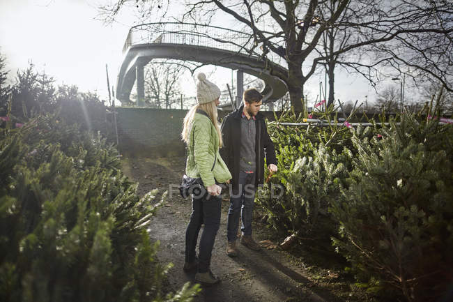 Woman choosing a traditional pine tree — Stock Photo