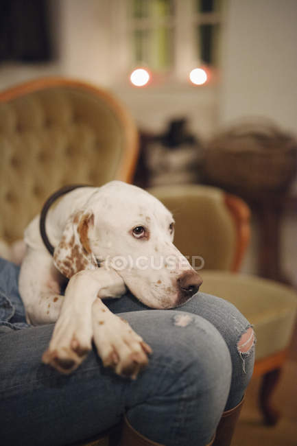 Woman on sofa with large dog — Stock Photo
