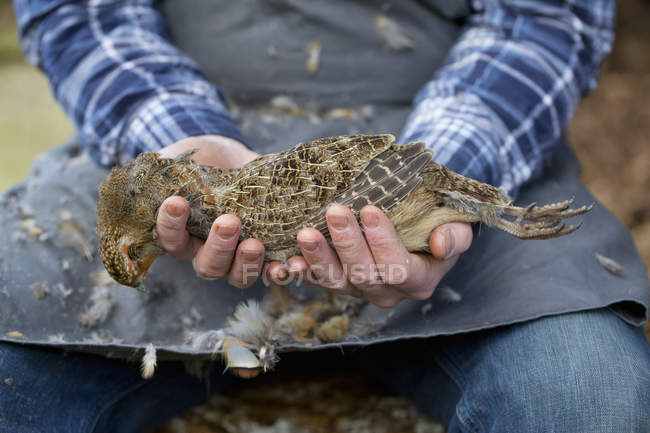 Homme tenant une perdrix morte — Photo de stock