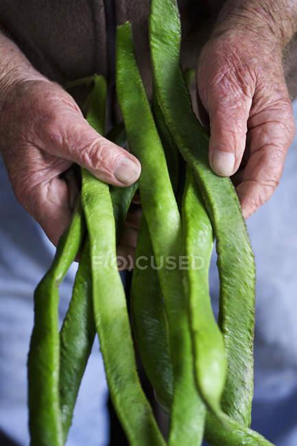 Homme tenant haricots verts runner — Photo de stock