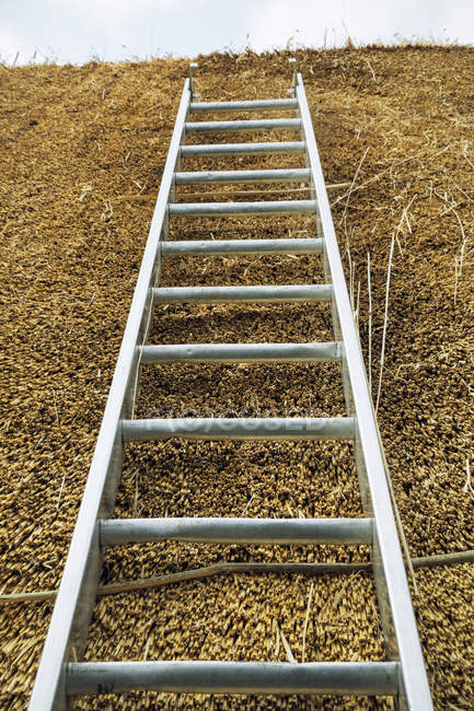 Low angle view of ladder — Stock Photo
