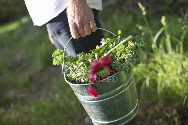 Organic farm in the countryside — Stock Photo