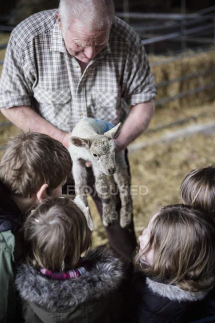 Landwirt und Kinder mit Neugeborenen Lämmern — Stockfoto