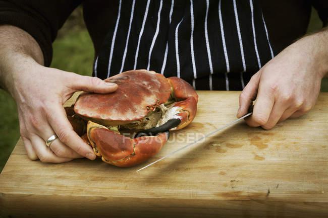 Chef che prepara un granchio . — Foto stock