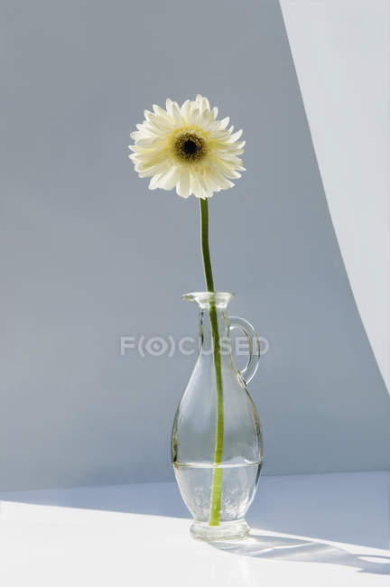 Gerbera flower in vase — Stock Photo