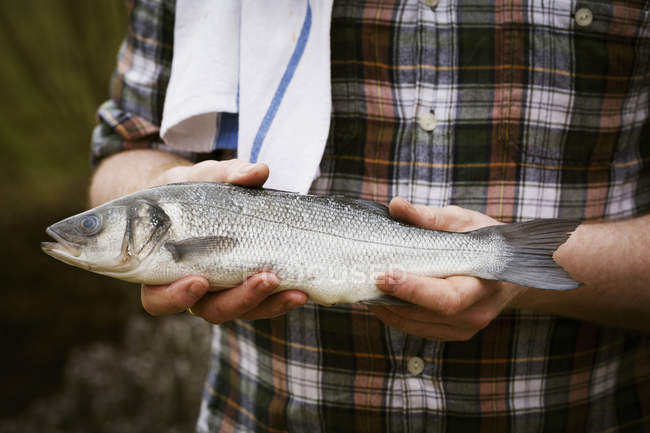 Chef holding a fresh fish — Stock Photo