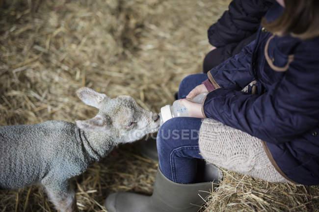 Little girl and newborn lamb — Stock Photo