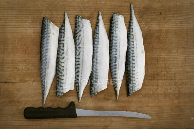 Fresh Mackerel fillets — Stock Photo