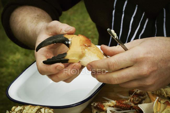 Chef preparing a crab claw. — Stock Photo