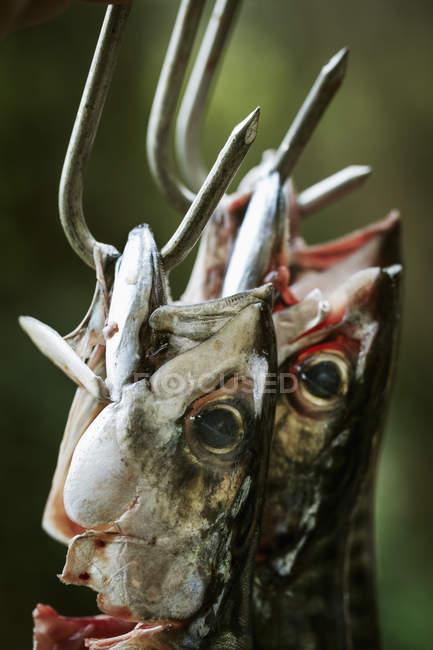 Mackerel hanging on metal hooks. — Stock Photo