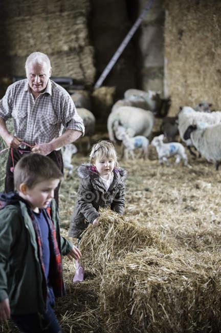 Bauern und Kinder in einem Lämmer Schuppen — Stockfoto