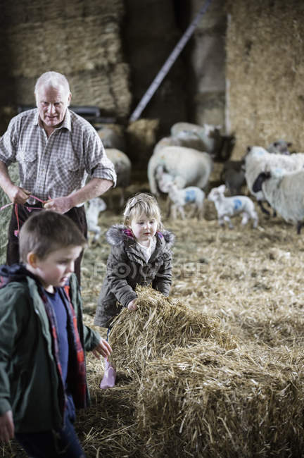 Farmer and children in a lambing shed — Stock Photo