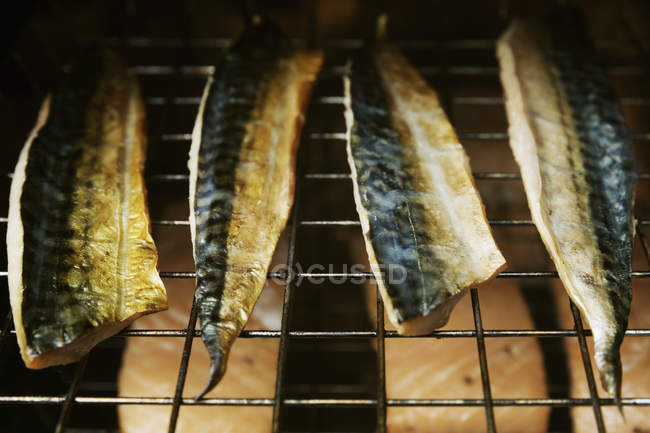 Filetes de caballa en un ahumador de pescado. - foto de stock