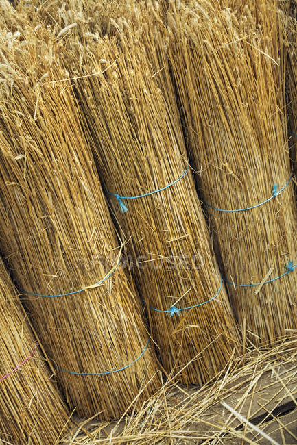 Straw for thatching a roof — Stock Photo