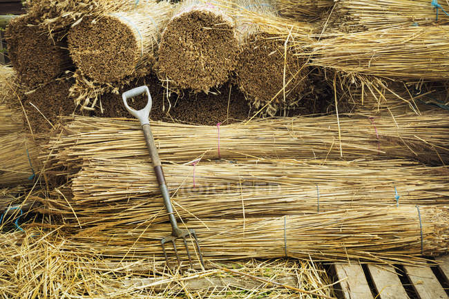 Bundles of straw for thatching — Stock Photo