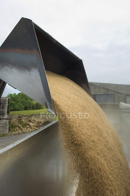 Grain versé dans la remorque — Photo de stock