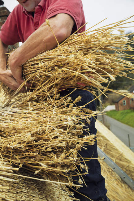 Thatcher holding yelm of straw — Stock Photo
