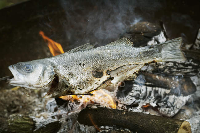 Whole fish grilled on a barbecue. — Stock Photo