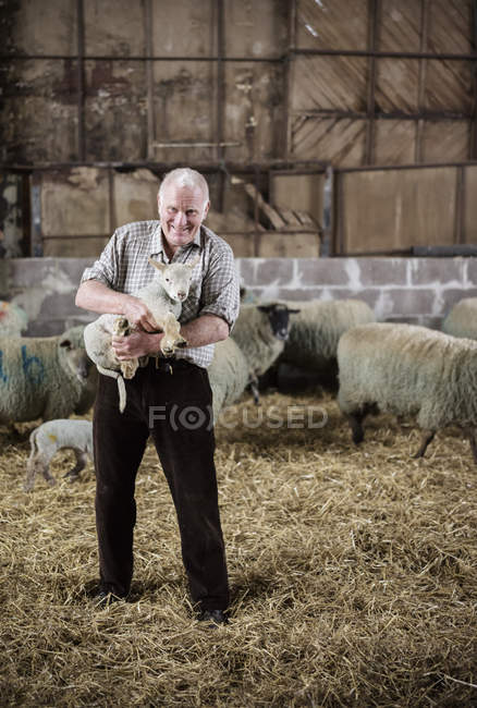 Senior farmer with newborn lamb — Stock Photo