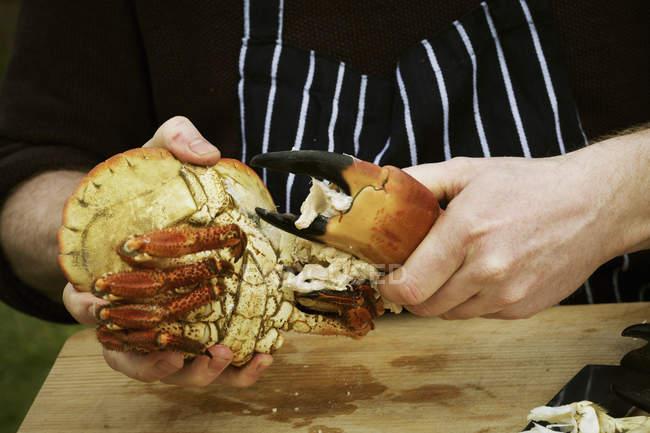 Chef preparing a crab. — Stock Photo