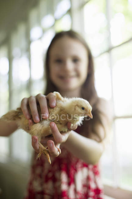 Girl holding a young chick — Stock Photo