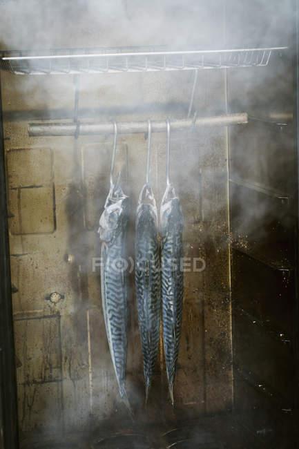 Caballa en un ahumador de pescado. - foto de stock